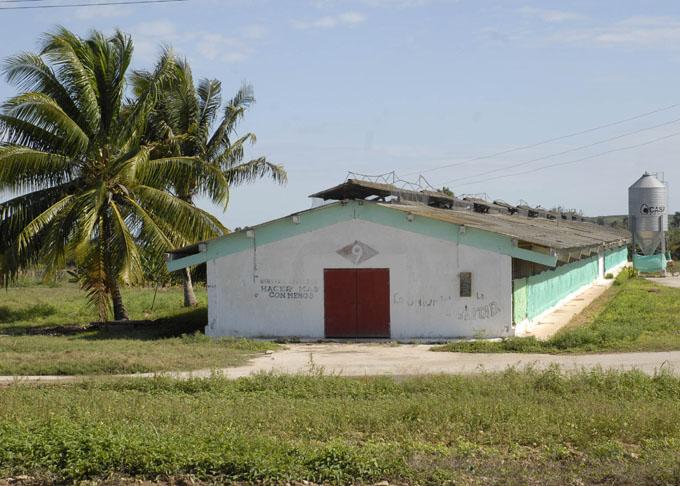 Trabajan en planta de incubación avícola en Jiguaní