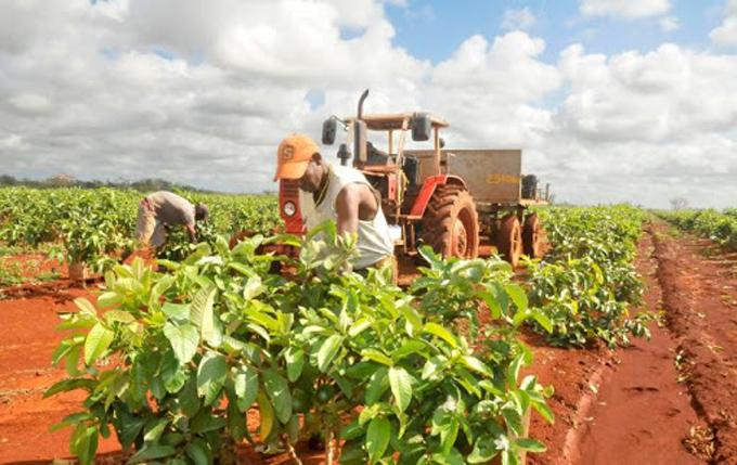 Analizan en presencia de Díaz-Canel labor de la Agricultura en Cuba