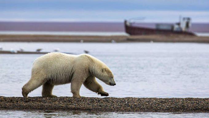 Científicos reiteran alerta sobre peligros del deshielo polar