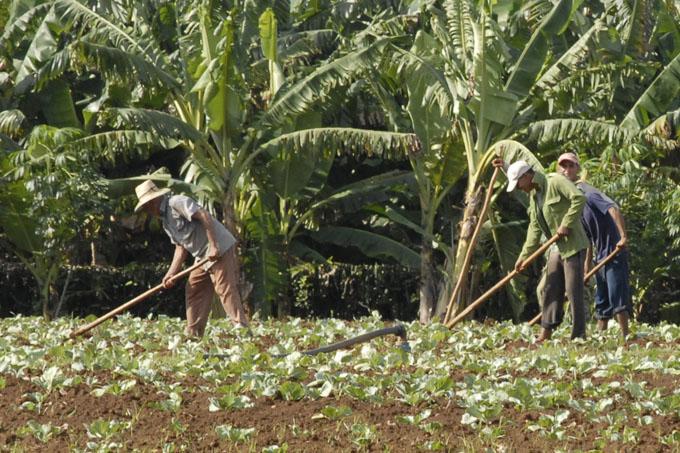 Refuerzan estrategia para garantizar producción de alimentos