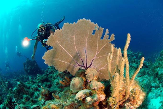 Prosiguen sesiones de taller científico sobre investigaciones marinas