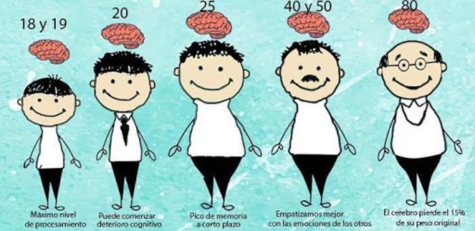 Estudio sobre envejecimiento cerebral sugiere dieta rica en grasas