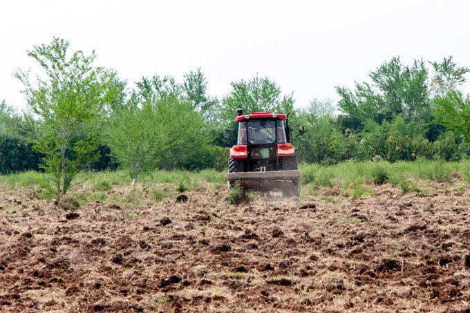 Agricultores incrementarán siembras en primavera