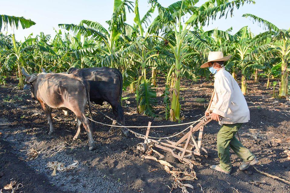 Urgen respuestas en comercialización de productos agrícolas