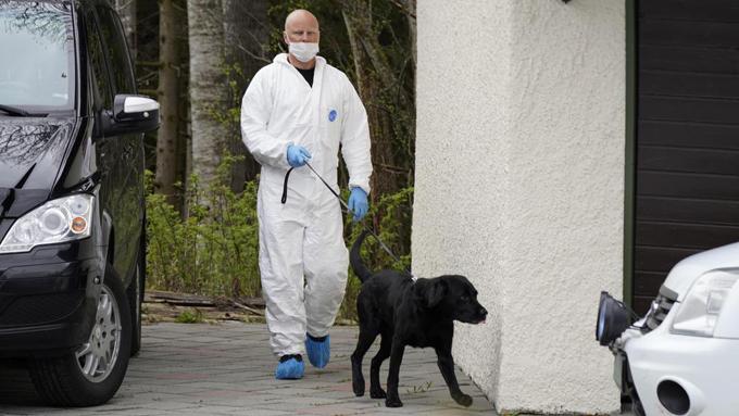 Reino Unido entrenará perros para detectar el nuevo coronavirus (+video)
