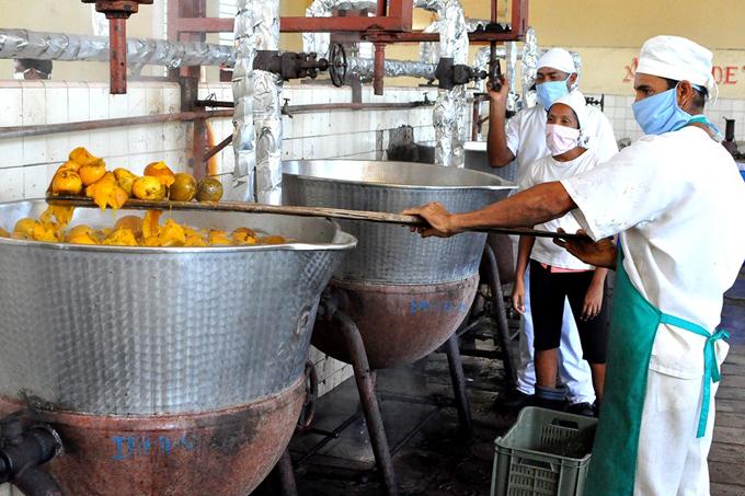 Alimentaria masoense enfrascada en cosecha del mango (+fotos)
