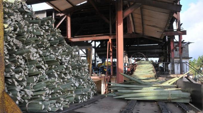 Retomarán en Cuba produccióndedetergente líquido de henequén