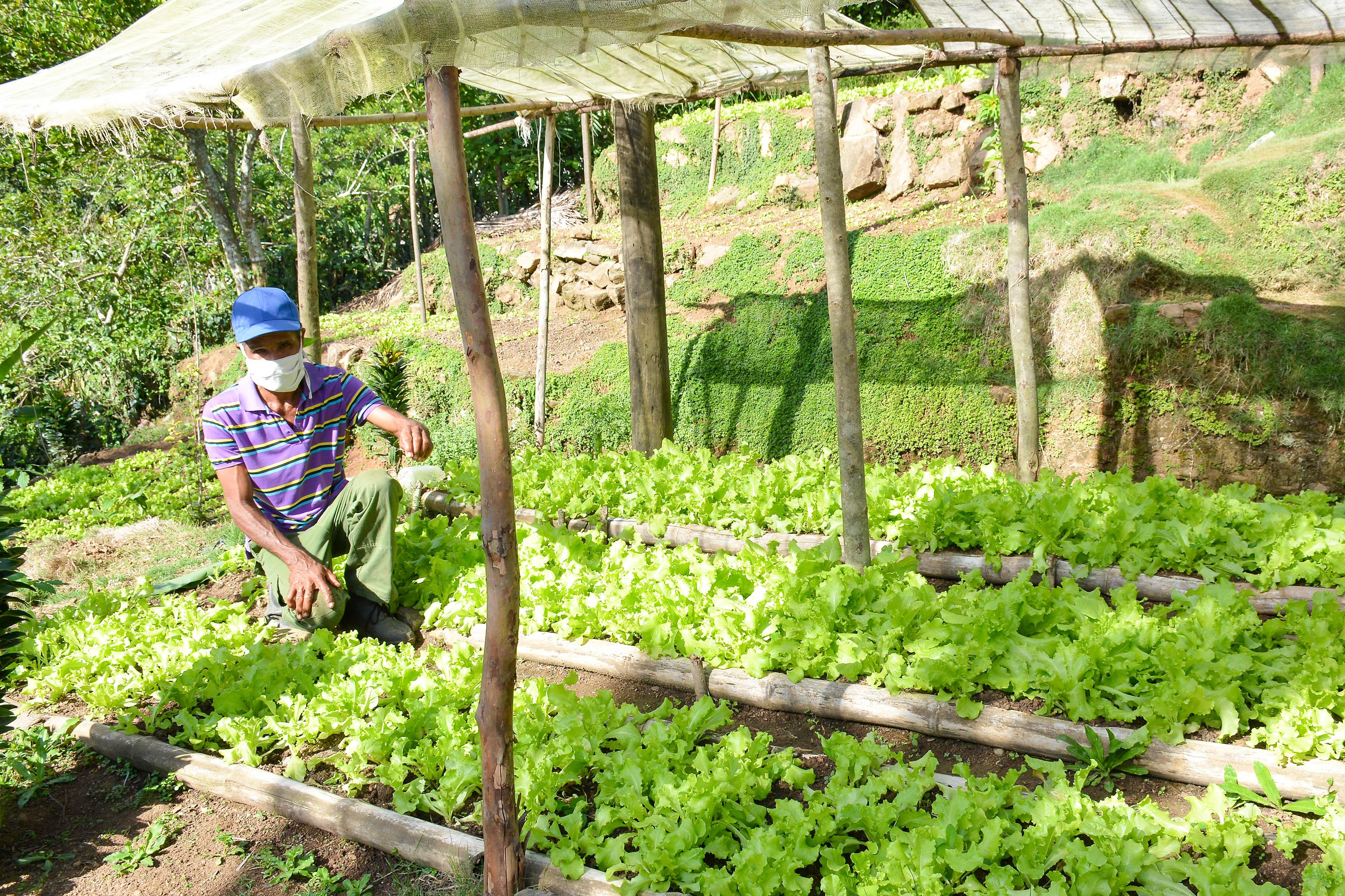Al rescate de la producción en patios y parcelas