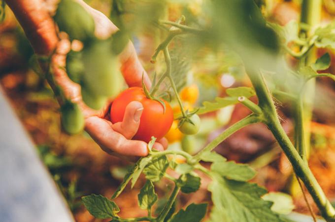 Destacan importancia  de la producción de alimentos