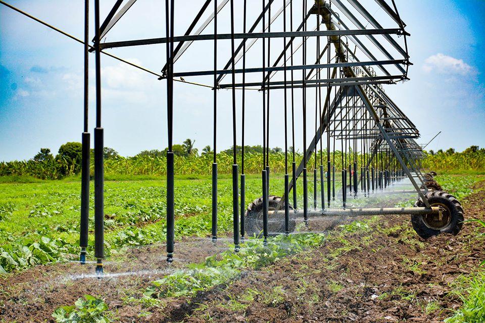 Bioproductos nacionales para la agricultura: una cantera aun por aprovechar