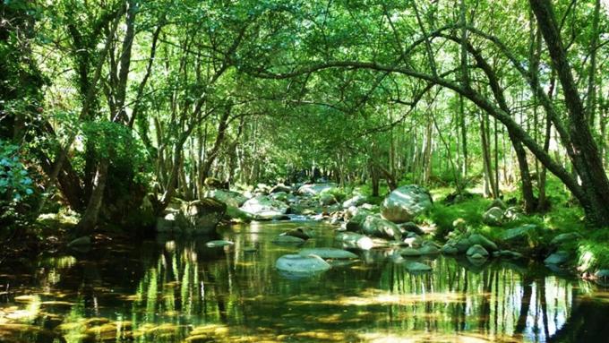 Destaca FAO importancia de la salud de los ecosistemas (+video)