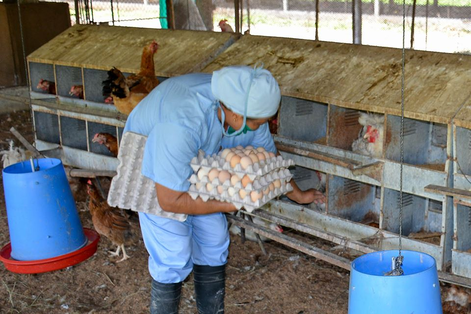 Avanza Empresa Avícola Granma