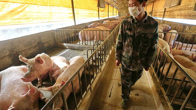 Descubren en China cepa de gripe porcina con potencial para pandemia