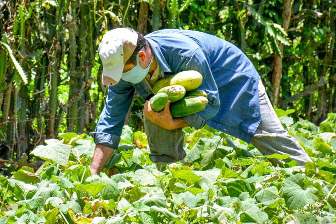 Jardín productivo en Guisa