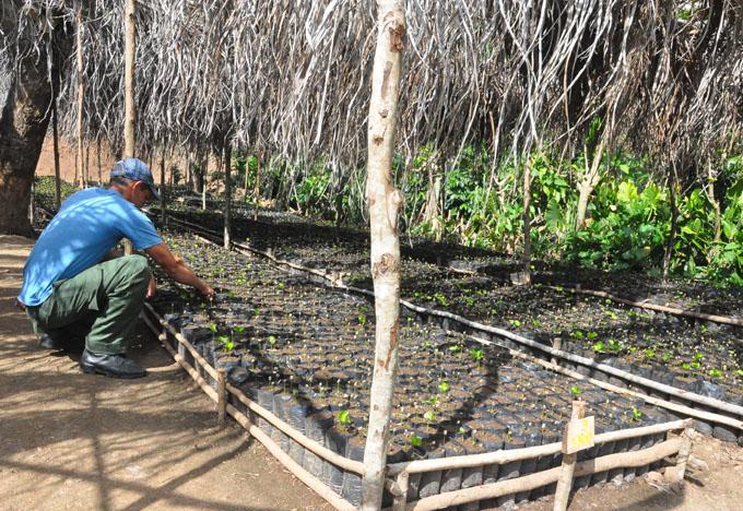 Celebran jornada por día del trabajador forestal
