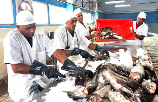 Potencian en Niquero captura y procesamiento de especies marinas