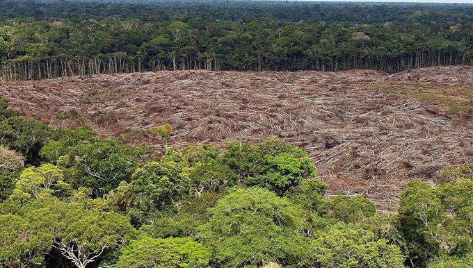 Deforestación en Amazonia de Brasil aumenta 25 por ciento (+video)
