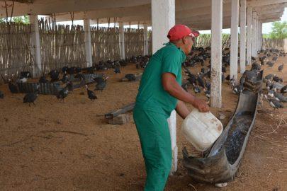 Acometen diversificación  productiva en Empresa Fernando Echenique (+fotos)