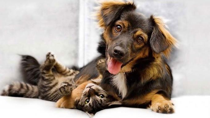 Aprobará Cuba política de bienestar animal en el presente año