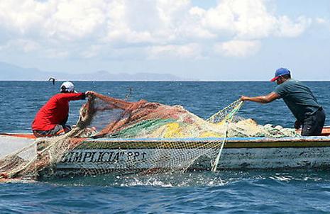 Pronostican creciente actividad de pescador comercial por cuenta propia (+video)