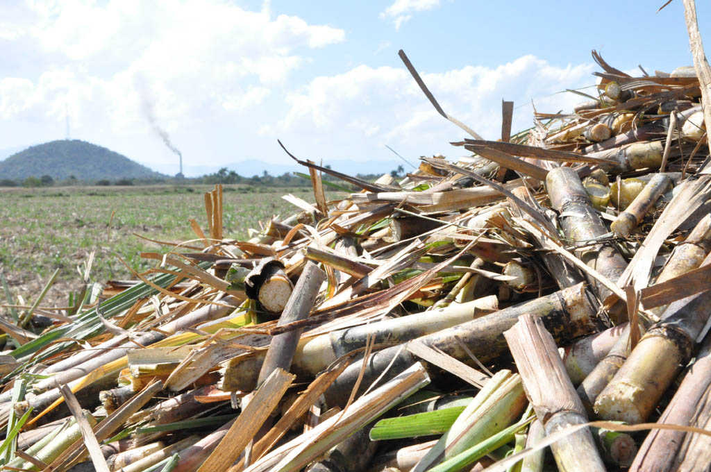 Tarea posible en la agroindustria azucarera