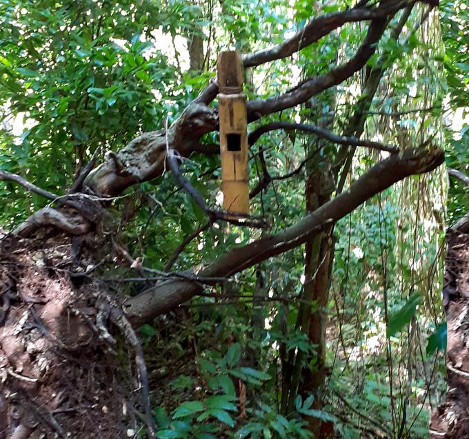 Fonadef incide en el desarrollo forestal del Cupaynicú (+fotos)