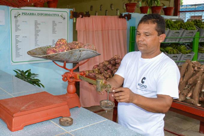 Aumenta acopio de productos agropecuarios en las montañas de Bartolomé Masó