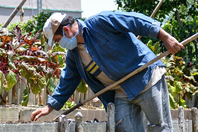 Acometen acciones productivas en Agricultura Urbana, Suburbana y Familiar