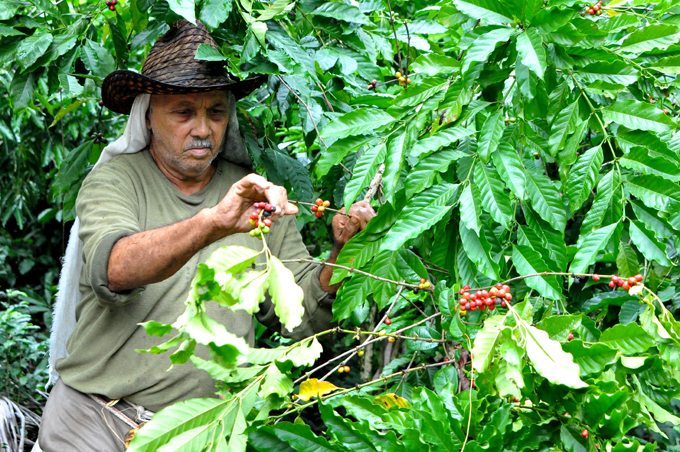 Empresa agroforestal de Buey Arriba diversifica producciones (+fotos)