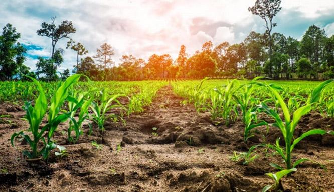 Sesionará evento de economía agropecuaria en Guisa