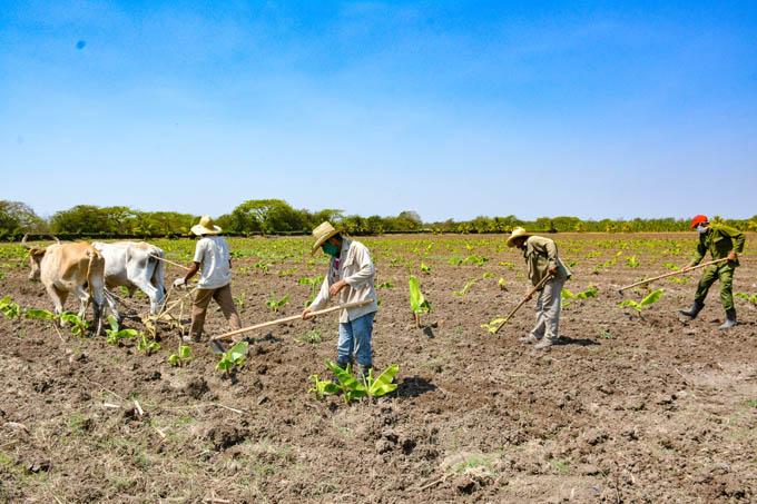 Granma sede de la  actividad  central por Día del trabajador agropecuario