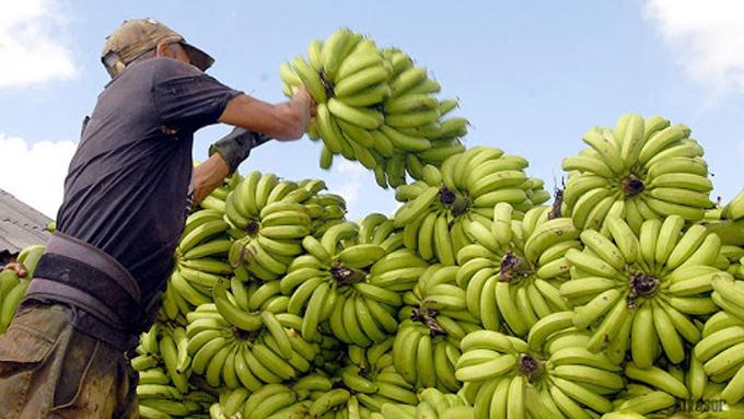 Producción de alimentos, prioridad económica de Cuba