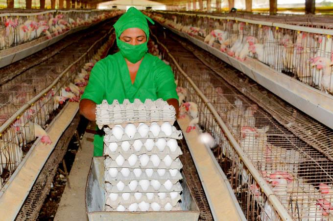 Unidad avícola festeja Día del trabajador agropecuario