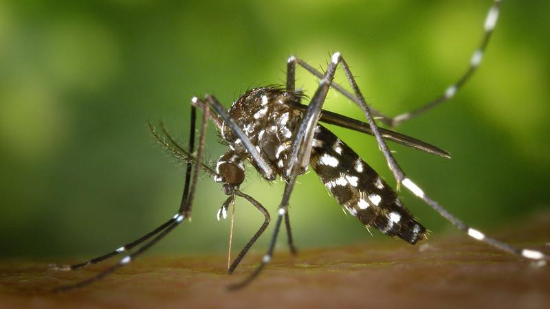 Insisten en redoblar vigilancia epidemiológica