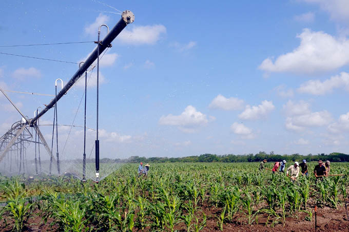 Claves de la nueva política de comercialización de productos agrícolas y otras novedades del campo (+ Video)