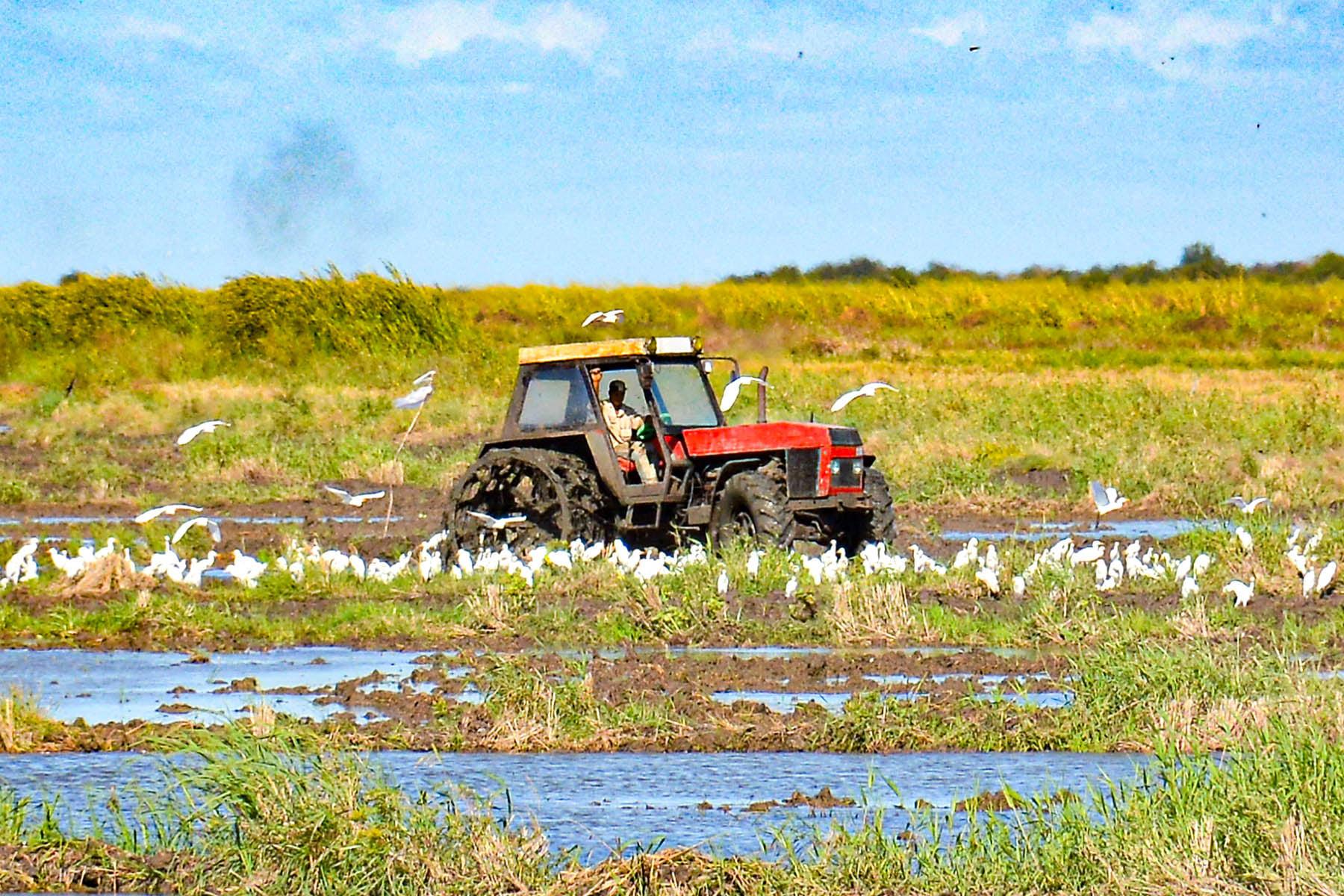 Granma inició campaña de siembra de frío en el  arroz