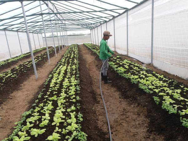 Comprometidos por mejores resultados la Agricultura Urbana, Suburbana y Familiar en Granma