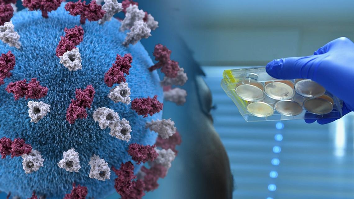 Covid-19, pandemia, nuevas cepas… en alerta la humanidad