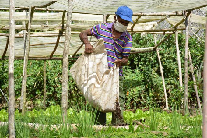 Granma celebrará aniversario de la Agricultura Urbana, Suburbana y Familiar