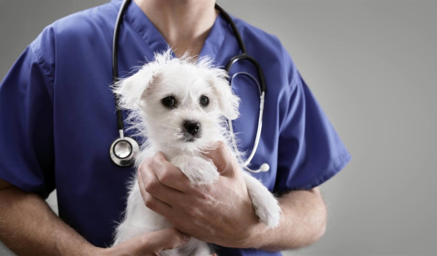 Dicta Cuba decreto sobre contravenciones de la medicina veterinaria