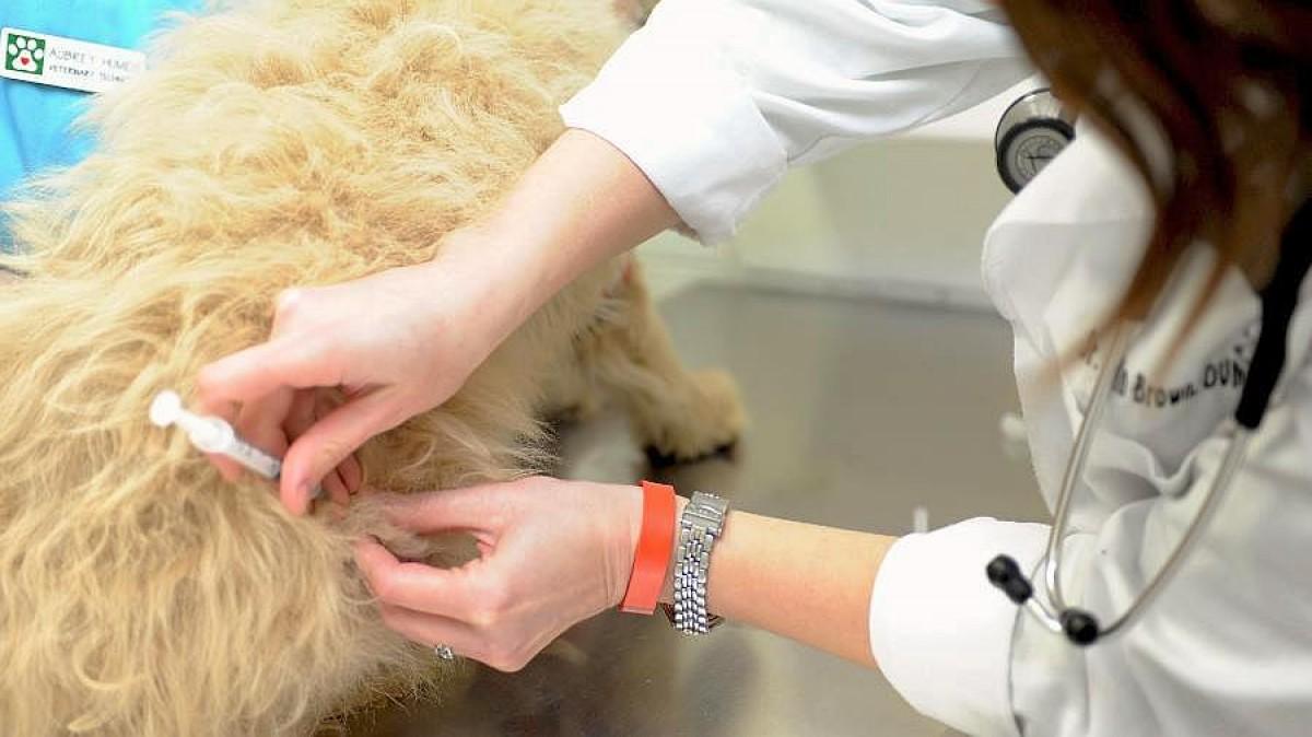 Rusia registra vacuna contra Covid-19 para animales