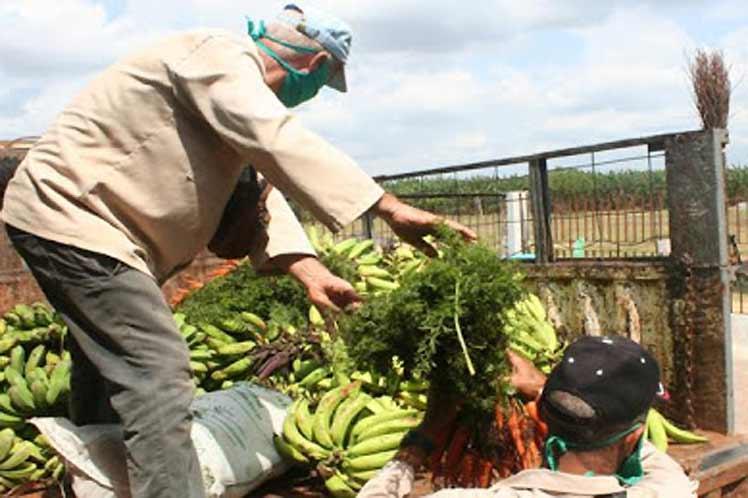Cuba trabaja por la seguridad alimentaria de la población