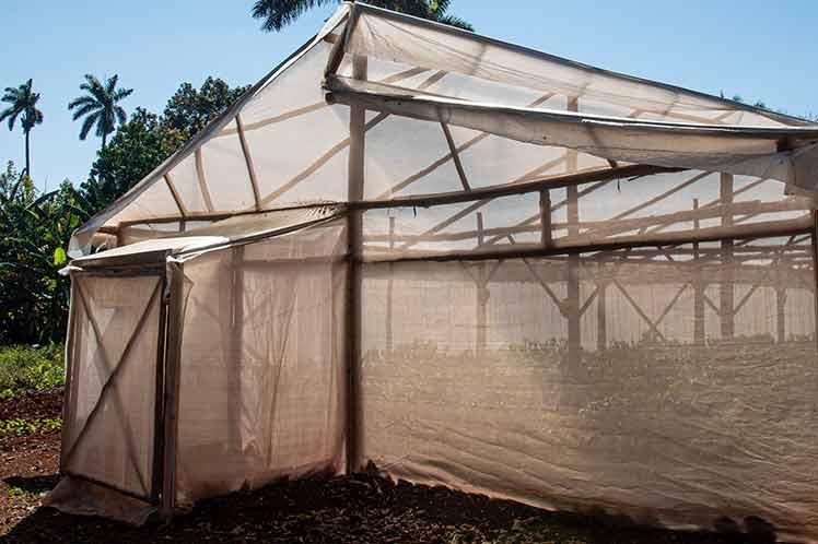 Casas rústicas de cultivos protegidos sustituyen importaciones