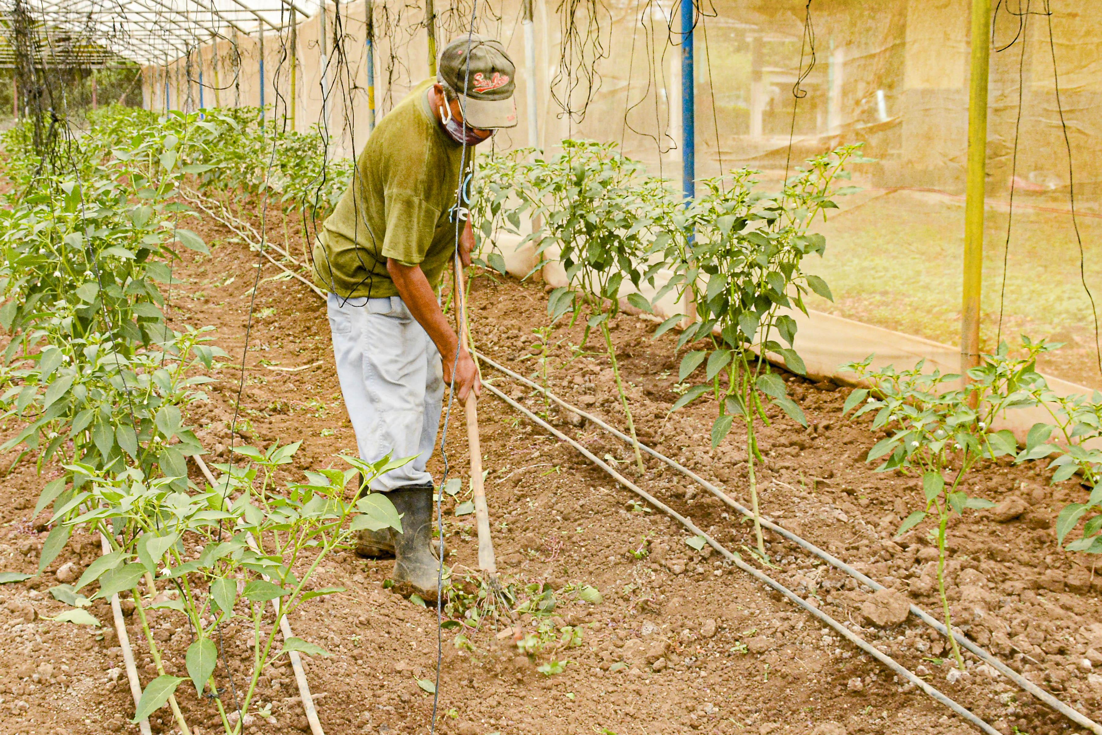 Casas de cultivos protegidos La Pupa: Punto de partida