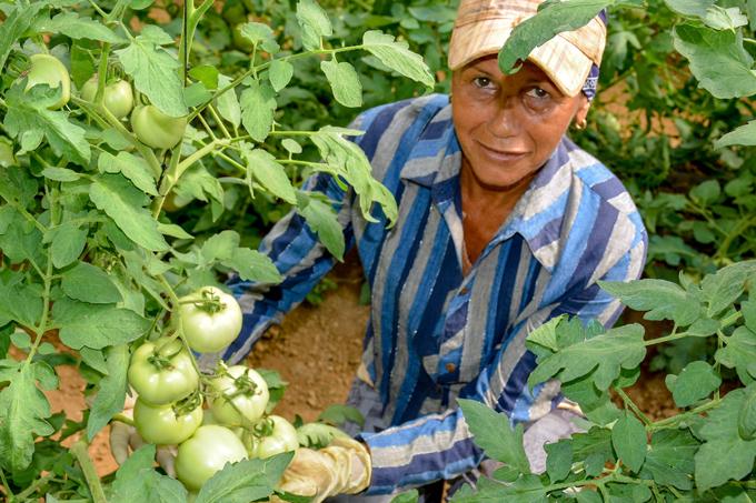 Producir alimentos es una prioridad  para todos