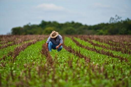 Sector financiero en Cuba por impulsar desarrollo agrícola (+Fotos)