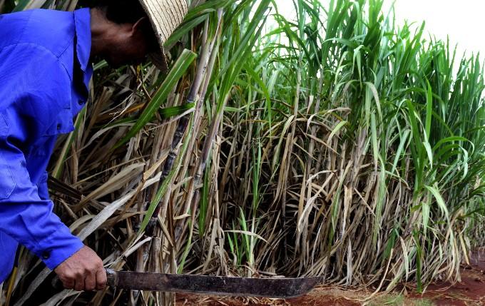 Impacta bloqueo de EE.UU. en la zafra azucarera cubana