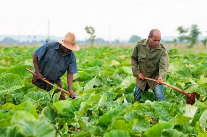 Flexibilizaciones a créditos bancarios, en beneficio del sector agrícola