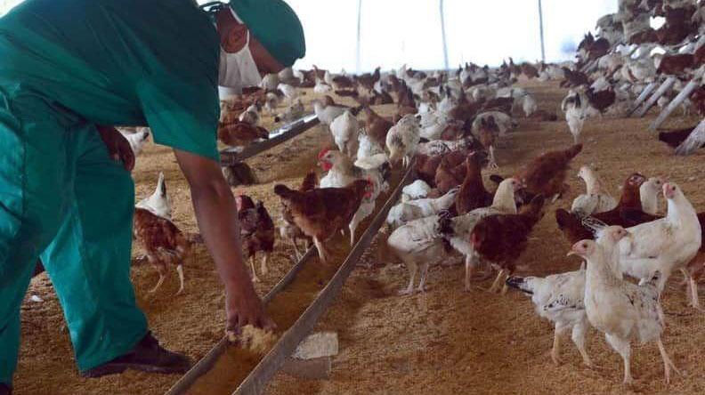 Proyecto científico reproduce especies avícolas