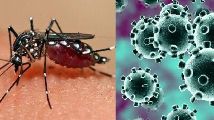 Dengue y Covid-19 marcan situación epidemiológica en Granma